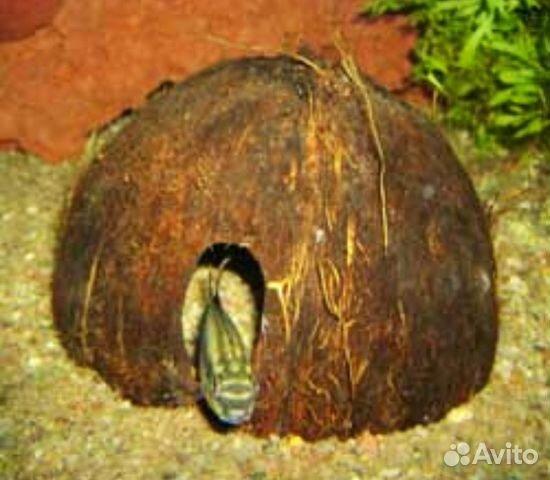 Поделки своими руками с кокоса