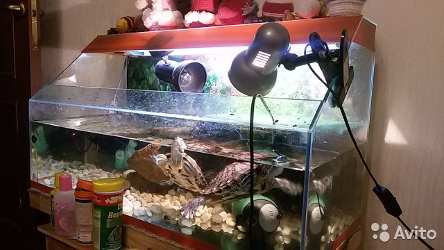 Как в домашних условиях в сделать аквариум в домашних условиях