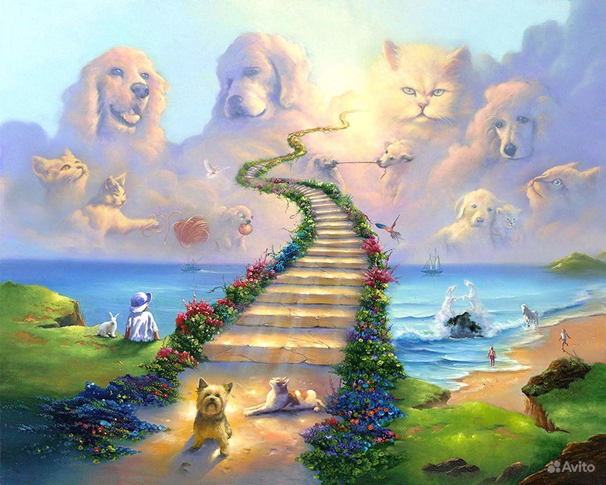 финале рай для собак картинки время