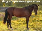 Ищу спортсмена для коня