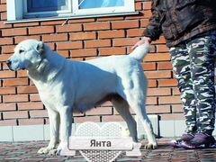 Подать объявление о пропаже собаки в барнауле частные объявления аренда жилья в иваново