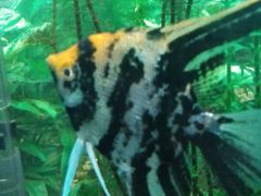 Аквариумные рыбки,аквариумные растения