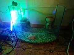 Аквариум для рыб 35х23х26 см