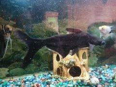 Рыба для аквариума
