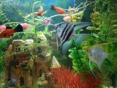 Аквариум с рыбками 80 литров