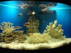 Панорамный угловой аквариум на тумбе