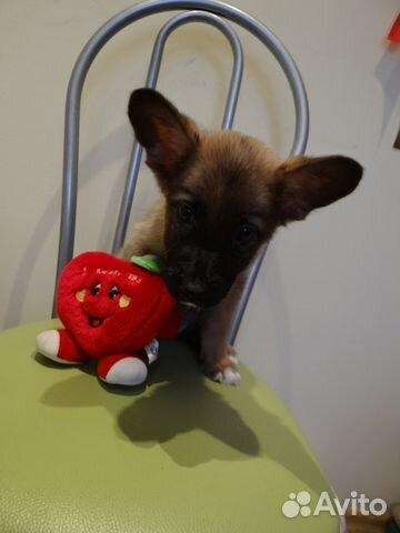 шерсти, кашемира кошки собаки дар пермь также варианты термобелья