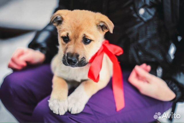 объявления продаже самара отдам животных для дачи этом году