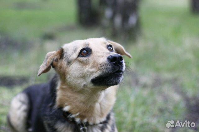 Улыбчивая собака Шелли в добрые руки купить на Зозу.ру - фотография № 3