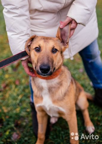 Мальчик Тиша, щенок в добрые руки, 9 месяцев купить на Зозу.ру - фотография № 2