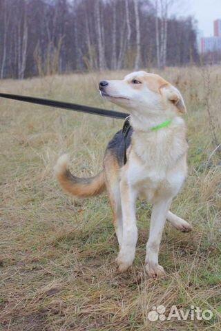 Чудесная собака подросток в дар купить на Зозу.ру - фотография № 2