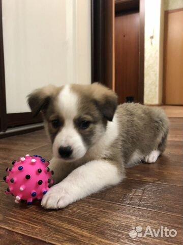 Замечательный щенок в добрые руки купить на Зозу.ру - фотография № 4