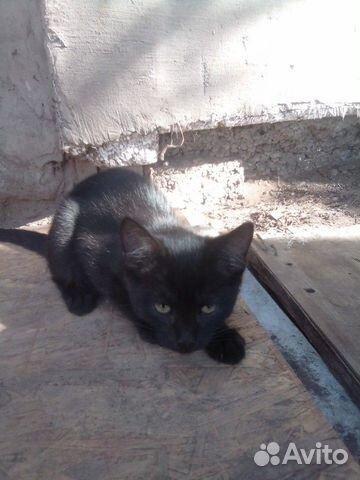 Котенок девочка  89397109841 купить 5