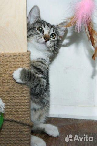 Котенок Варька ищет свой дом