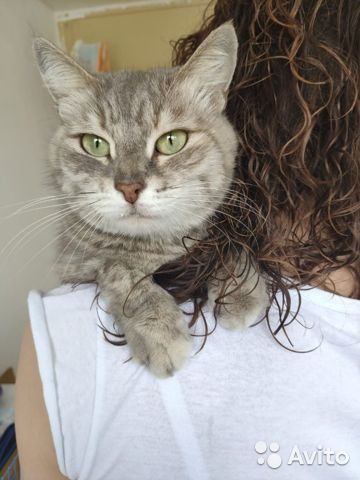 Кошка Плюша, 1 год  купить 4