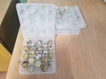 Яица перепелиные инкубационные