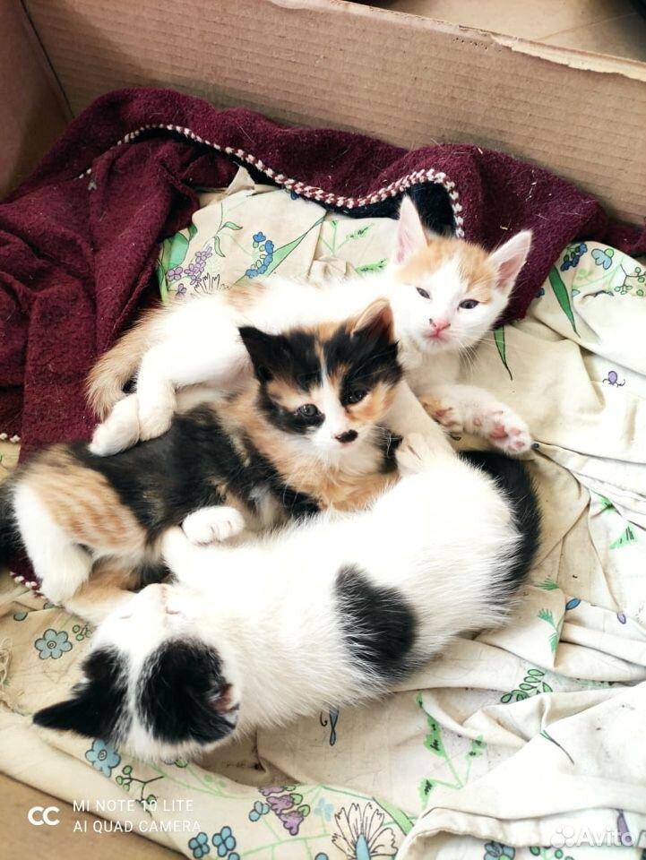 Котята в добрые руки  89011218595 купить 4
