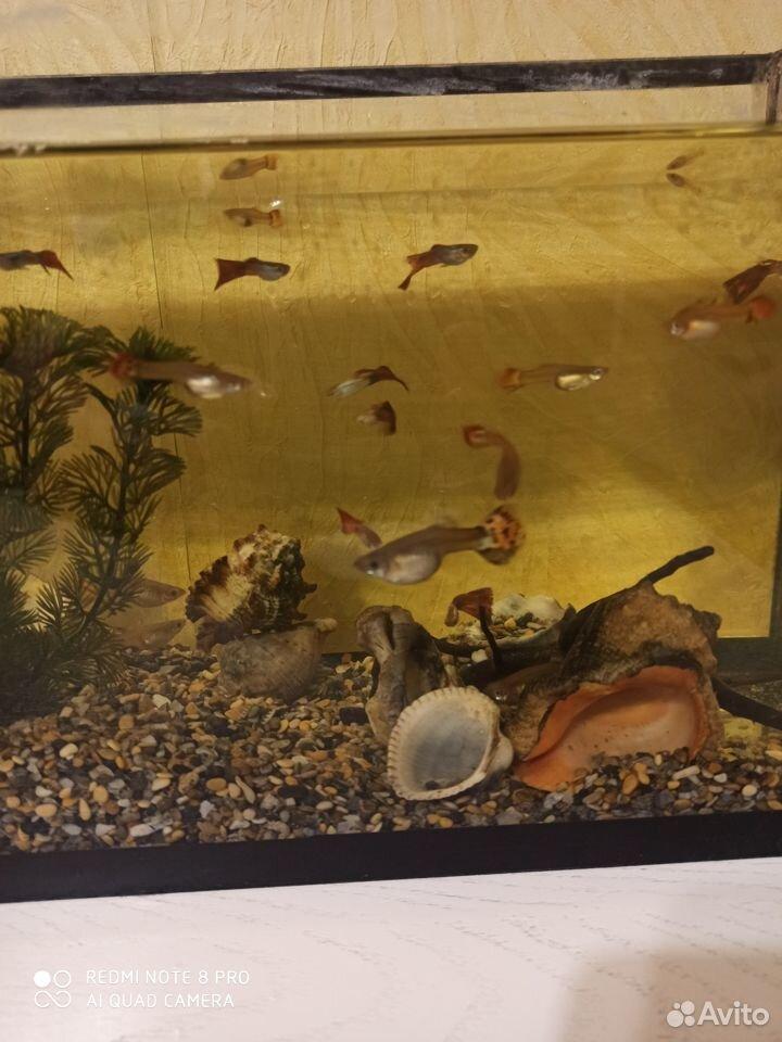 Рыба  89102165289 купить 1