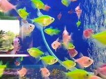Рыбка исполняющая желание