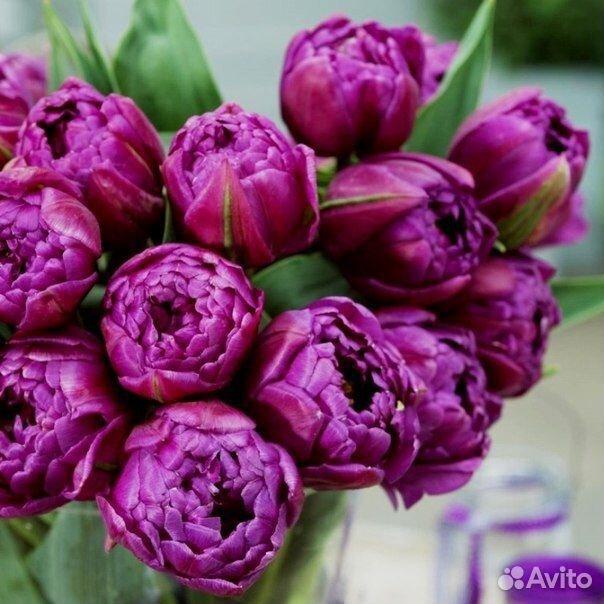 Тюльпаны  89092263980 купить 5