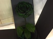 Роза в колбе «Зелёная» опт и розница