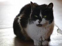 Наидобрейшая и милая кошка в добрые руки