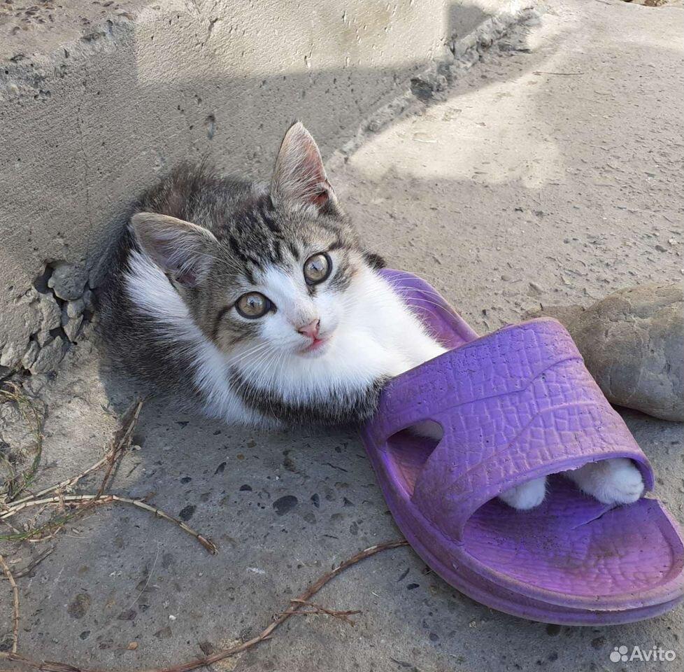 Котик смелый